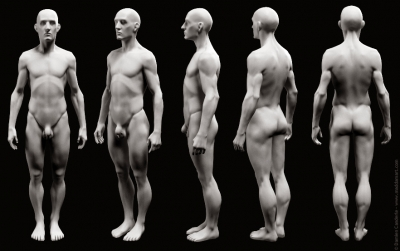 damien_canderle_anatomical_study_02